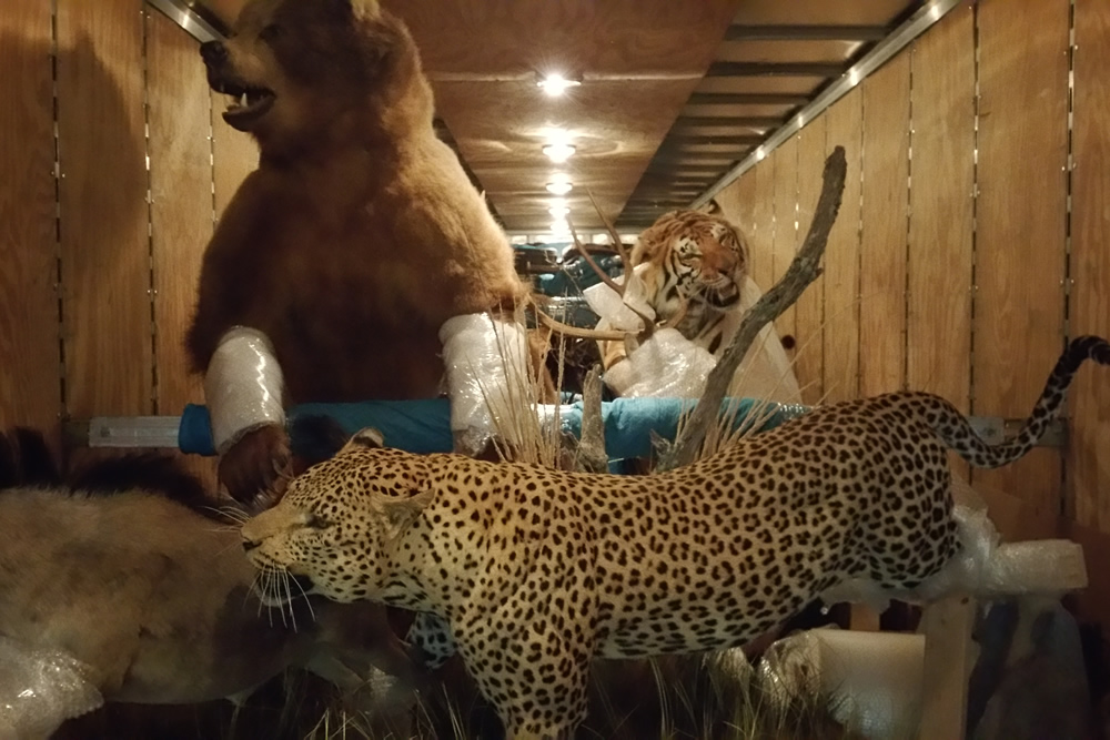 Loading a bear, leopard, and tiger